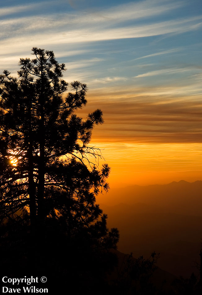 A pine tree atop Four Peaks, Arizona at sunset