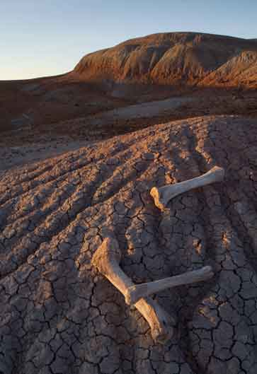 Dry bones in the Painted Desert, Arizona