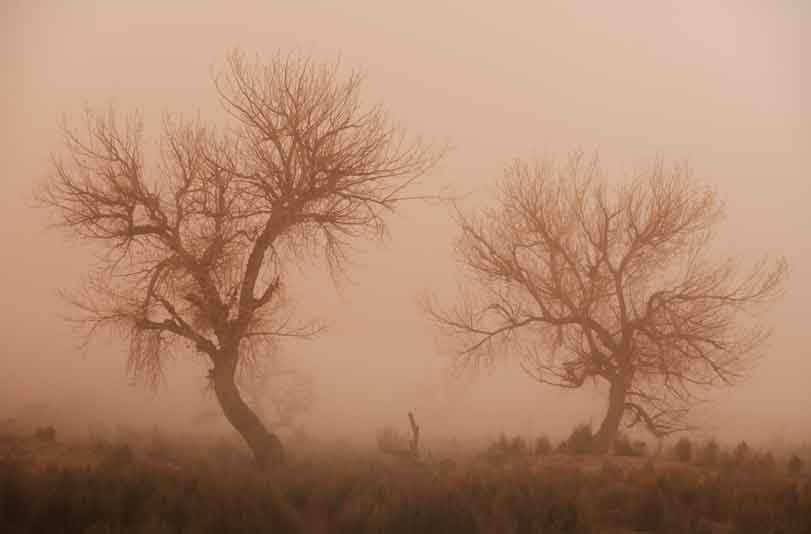 Trees in a dust storm in the Painted Desert, Arizona