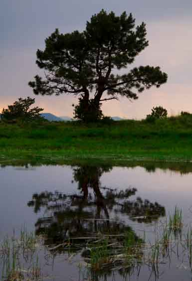 Tree at pond in the San Francisco Peaks of northern Arizona