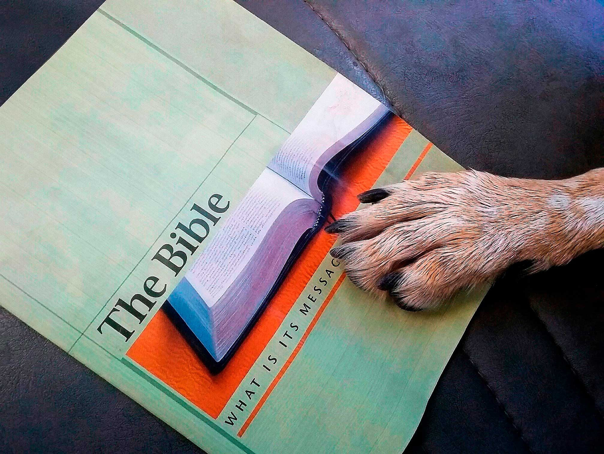 dog with bible