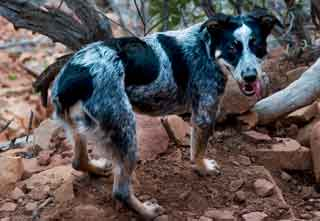 Photography of dogs by Dave Wilson of Phoenix, Arizona