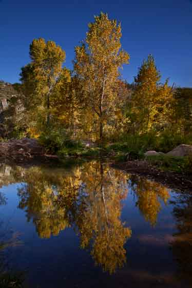 Autumn at Ellison Creek, Arizona (the Water Wheel area just upstream from the East Verde River)