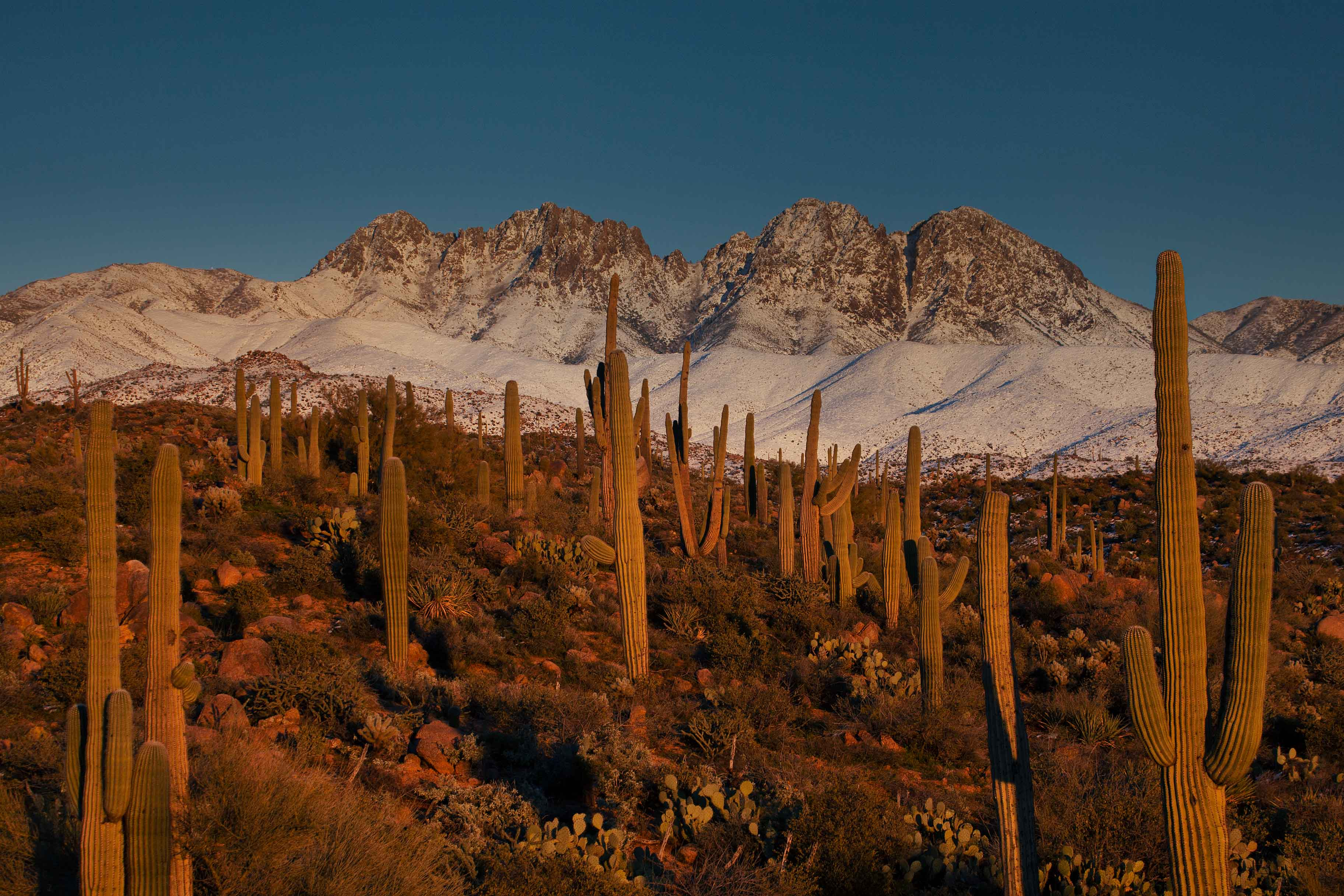 Four Peaks in the Arizona's Mazatzal Mts. covered in snow, with saguaro cactus in the foreground
