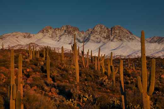 Four Peaks, Arizona, covered in snow, with saguaro cactus in the foreground