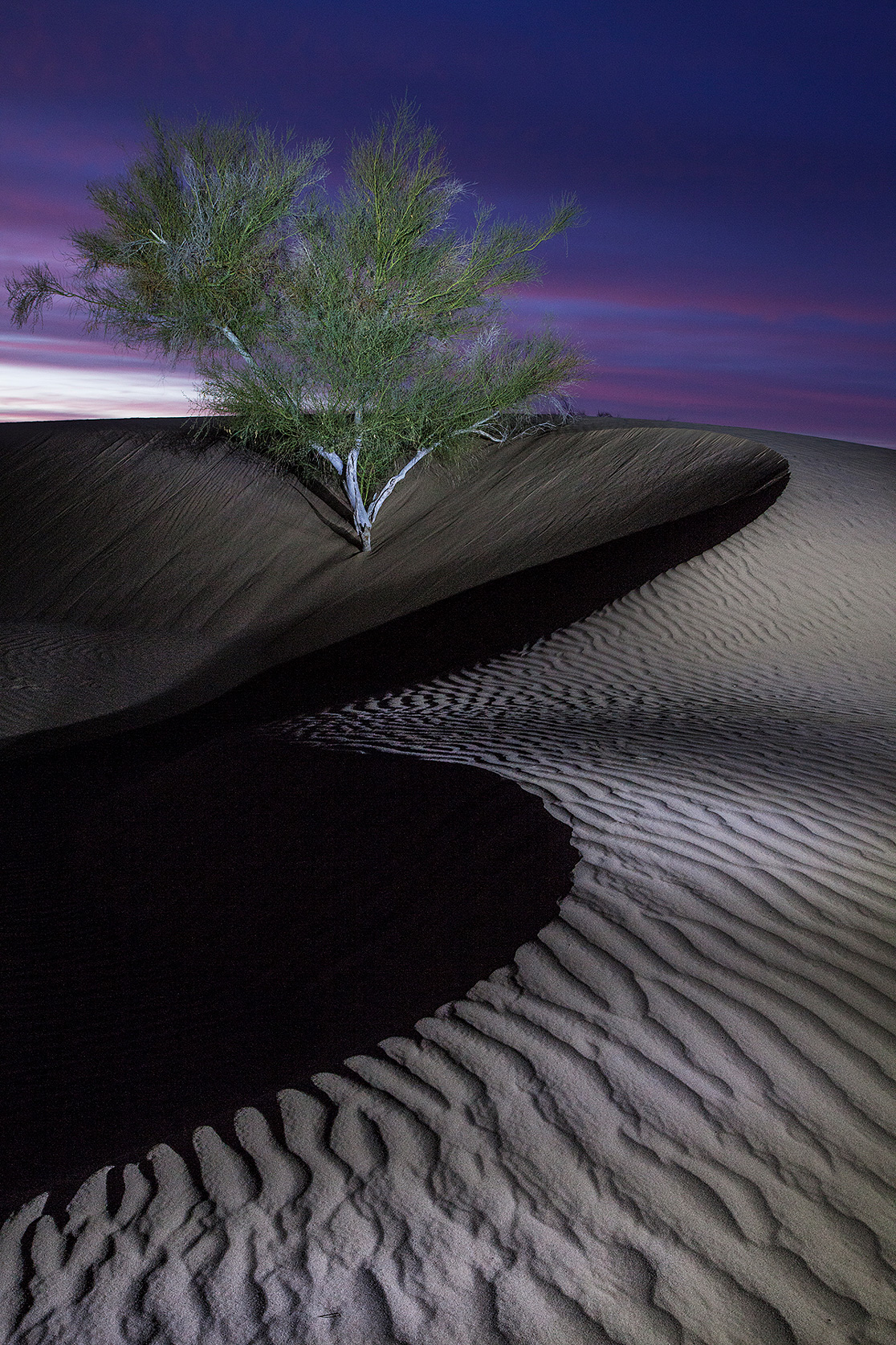 Imperial Sand Dunes, California