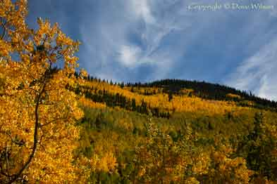Fall colors at Lockett Meadow in the San Francisco Peaks of northern Arizona