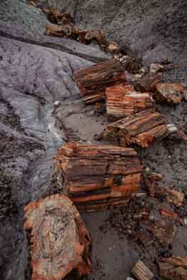 Petrified Wood at Petrified Forest National Park, Arizona