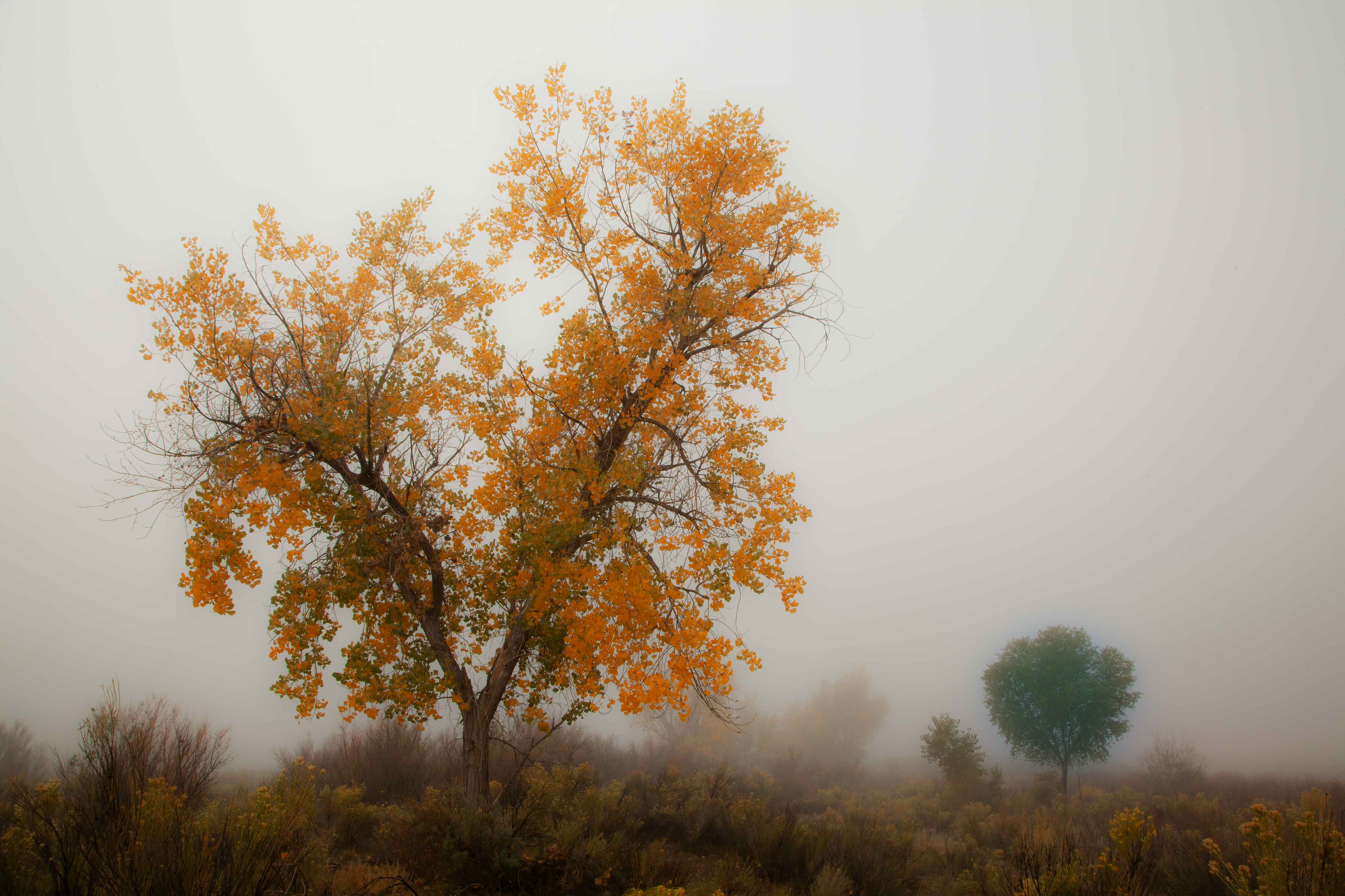 Autumn trees along the Puerco River, northern Arizona