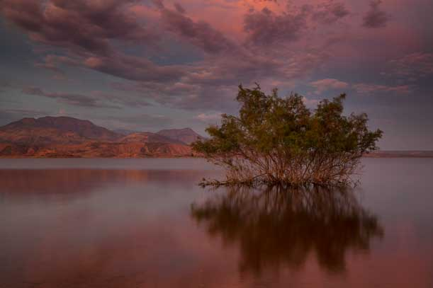 Desert tree in Lake Roosevelt, Arizona at sunset