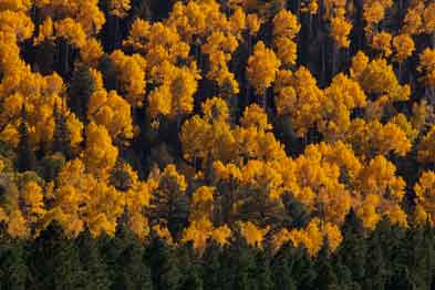 Autumn in Northern Arizona