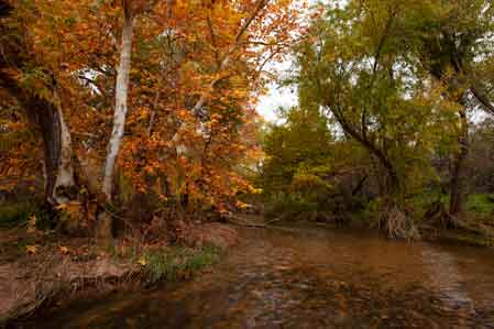 Autumn at Sycamore Creek in the Mazatzal Mts. of Arizona