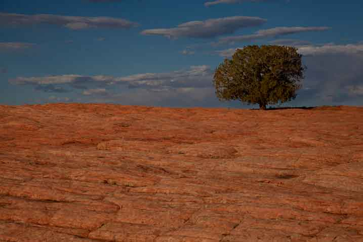 Lone juniper tree and sandstone in the high desert near Tsegi on the Navajo Reservation in northern Arizona