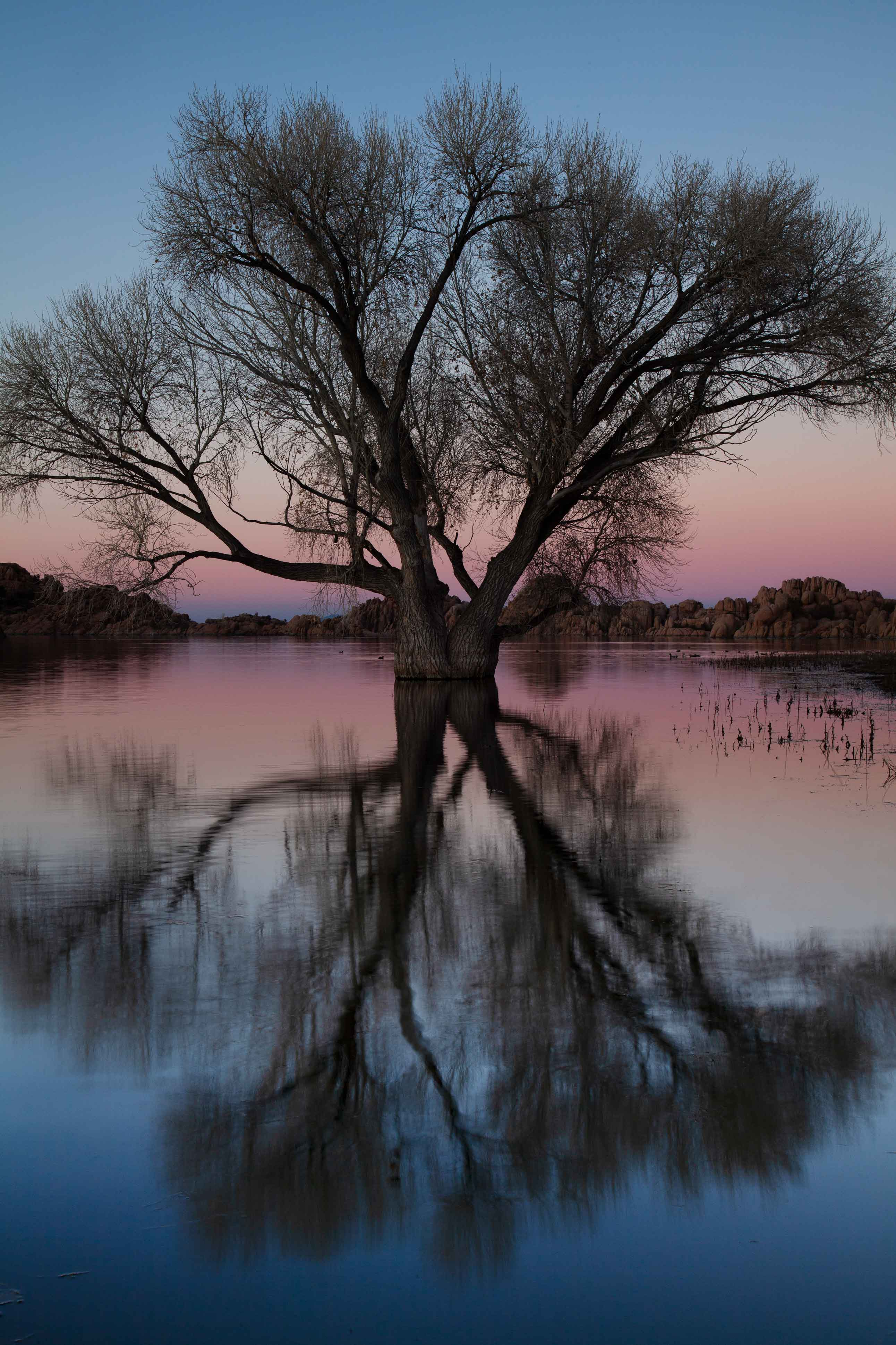 Tree at Watson Lake on the edge of Prescott, Arizona