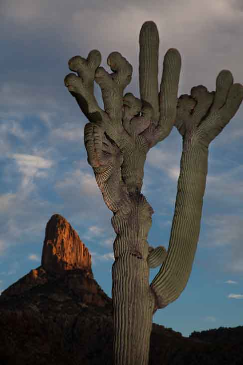 Weaver's Needle, Superstition Mts., Arizona
